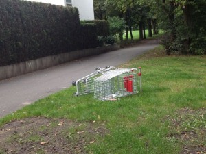 BREEDING SEASON-TROLLEY shot by Antonia Ha